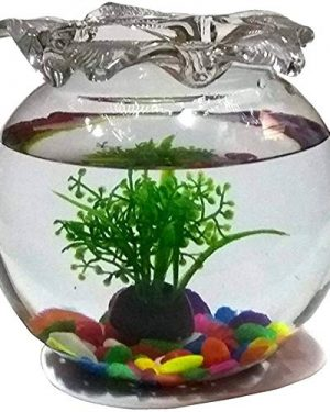Round Glass Fish...